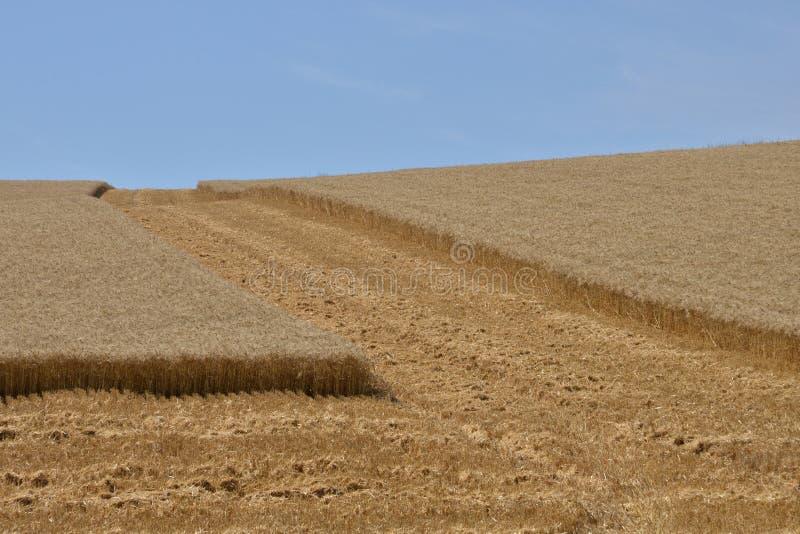 法国,在Oinville sur附近Montcient村庄的麦田  免版税库存图片