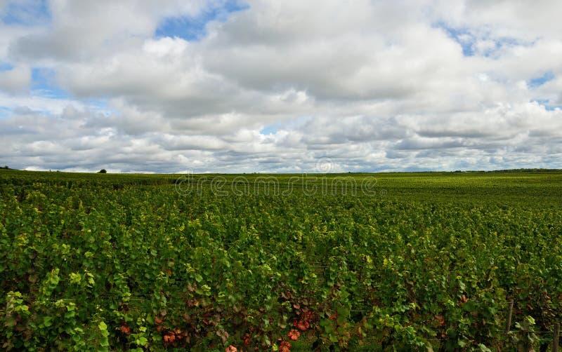 法国,香槟葡萄领域 免版税库存图片