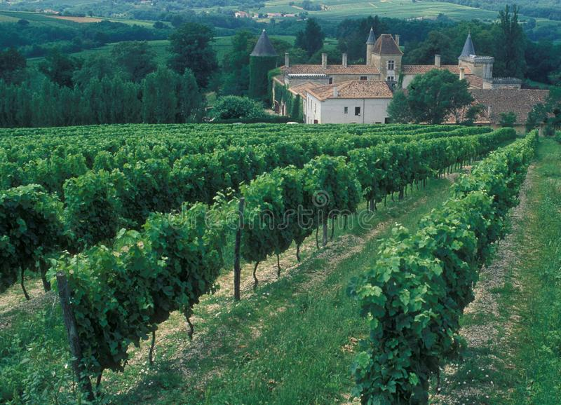 法国:酒区域红葡萄酒, Chardonay葡萄种植园 图库摄影