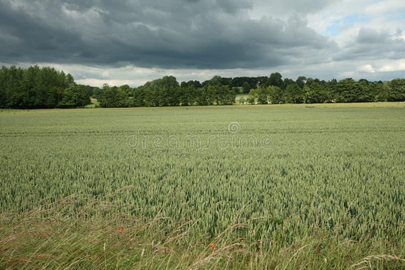 法国wheatfield 免版税图库摄影