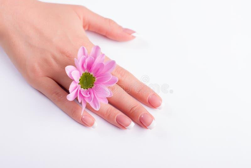 法式修剪和柔和的桃红色花 免版税图库摄影