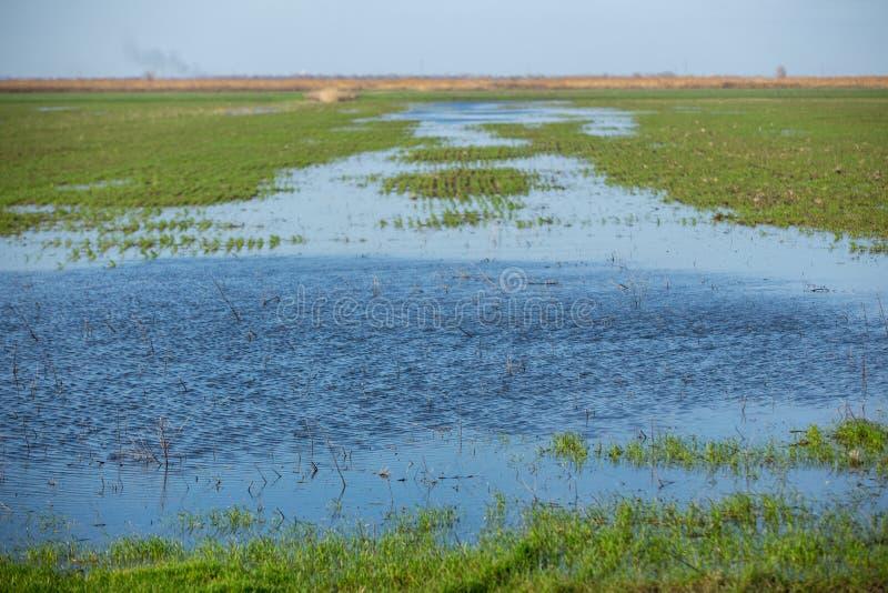 洪泛区草甸 图库摄影
