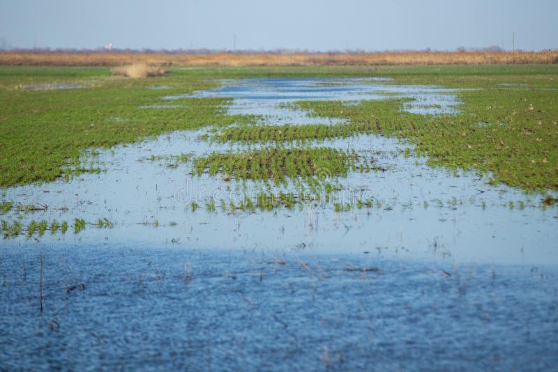 洪泛区草甸 库存照片
