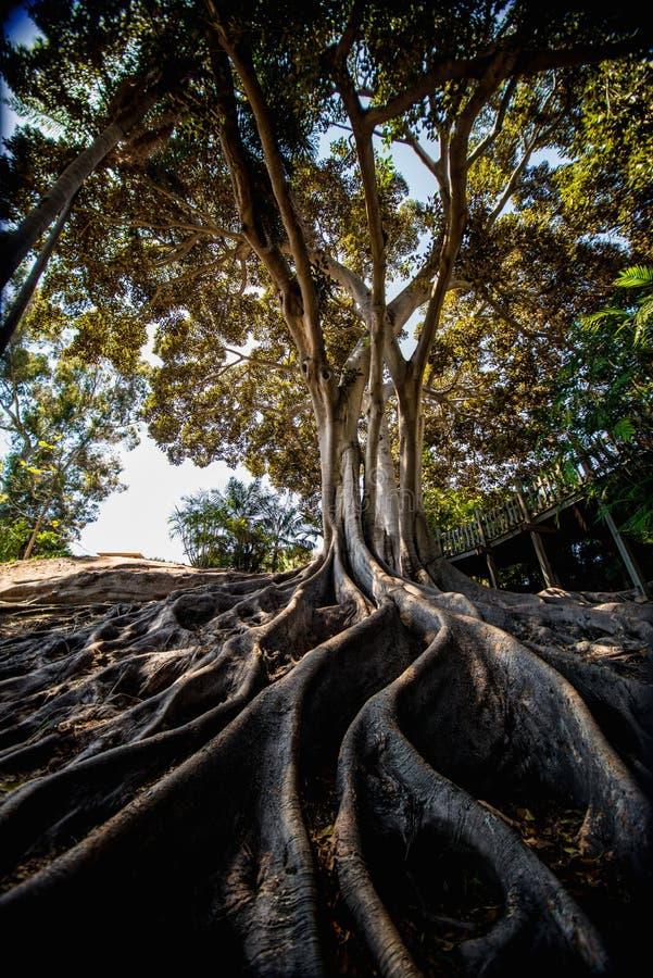 巴波亚公园 免版税库存照片