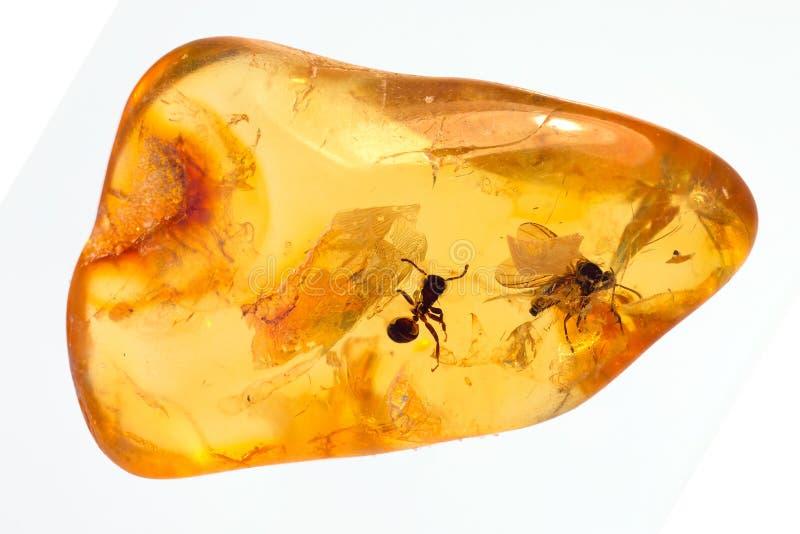 波儿地克的琥珀色的石头 图库摄影