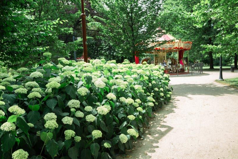 波兰弗罗茨瓦夫的Park Staromiejski绿林和旋转木马 免版税库存图片