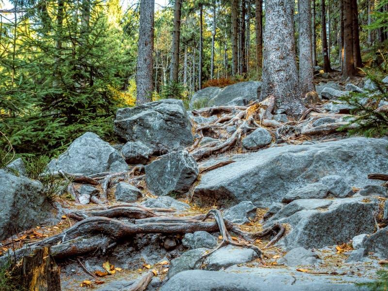 波兰桌山国家公园岩石游路 免版税库存照片