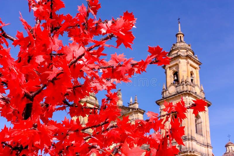 波哥大,哥伦比亚大教堂  在红色树的焦点 免版税库存照片