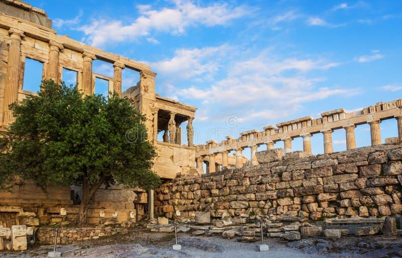 波塞冬门廊,一部分的厄瑞克忒翁神庙,神圣的橄榄树,雅典娜Polias寺庙墙壁上城的,雅典,希腊反对 库存照片