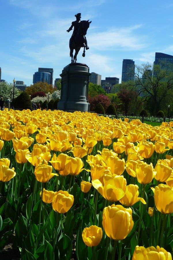 波士顿共同性的华盛顿公园 免版税图库摄影