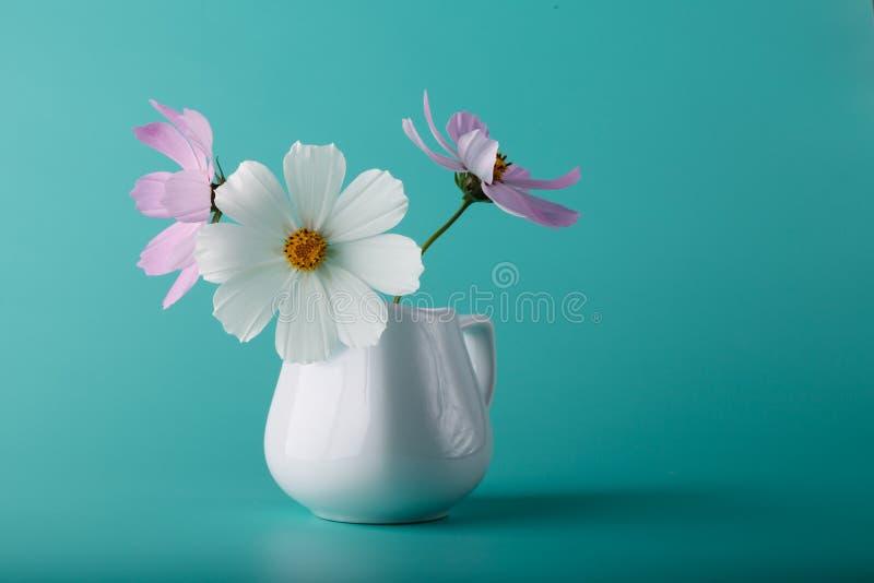 波斯菊花在水色颜色背景的牛奶罐 图库摄影