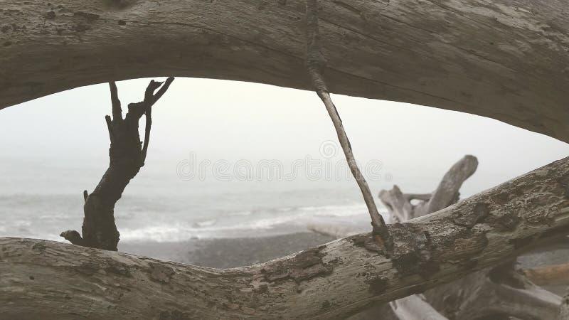 波浪和漂流木头 免版税图库摄影