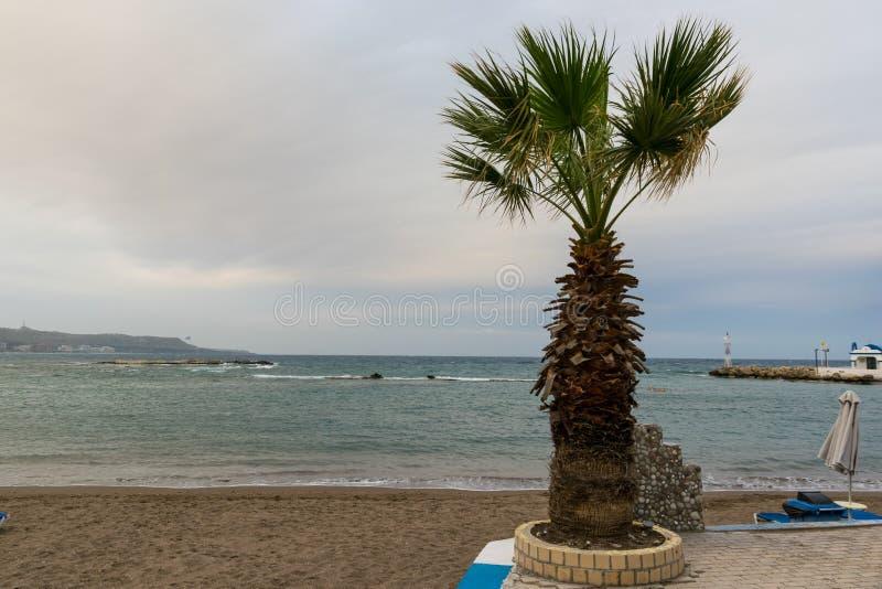 波浪和风在海滩与棕榈 免版税图库摄影