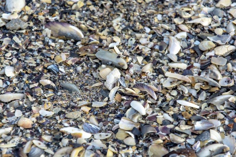 波浪抛出的贝壳对海滨 免版税库存图片
