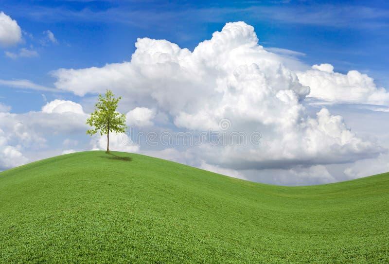 Download 波浪春天领域 库存照片. 图片 包括有 绿叶, 背包, 蓝色, 云彩, 国家(地区), 地产, 风景, 乡下 - 26436268