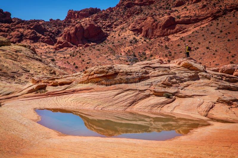 波浪银朱的峭壁亚利桑那美国 库存照片