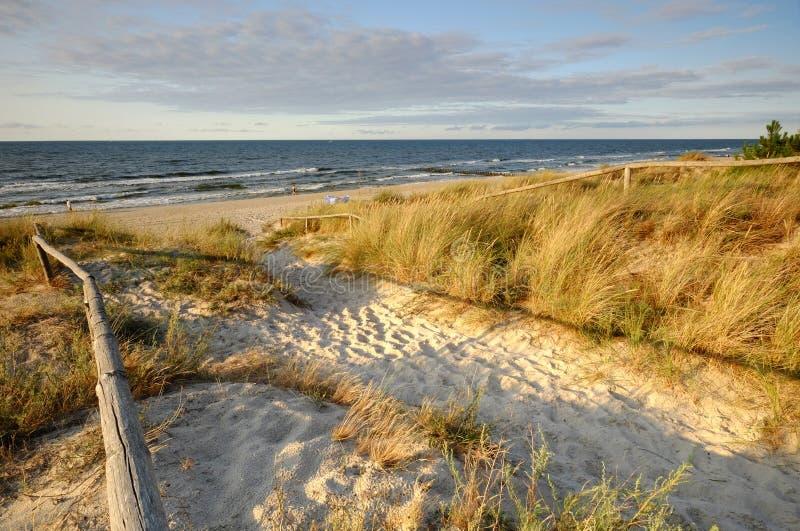 波罗的海和沙丘与金黄草,波兰, Kolobrzeg 免版税库存图片