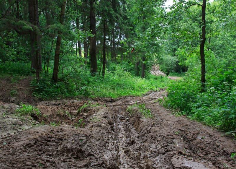 泥和黏土不通的森林公路  库存照片