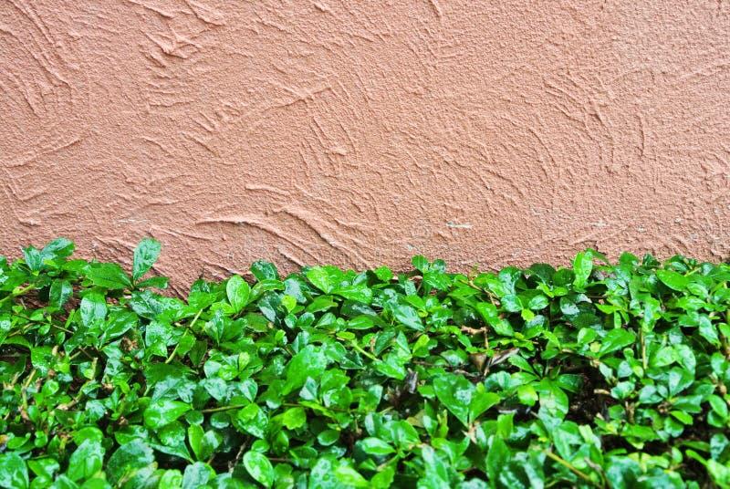 水泥墙壁和叶子 图库摄影