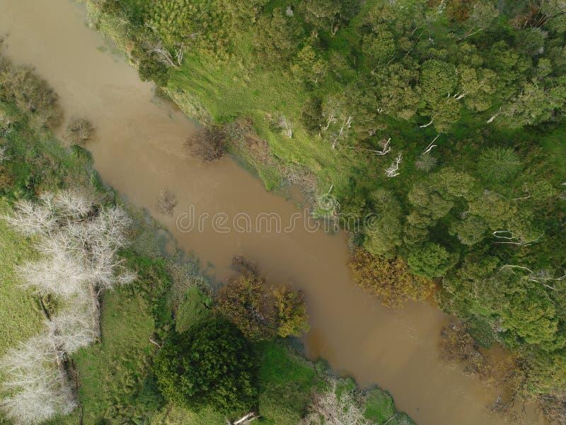 泥泞的河和周围的植被的顶上的射击 免版税图库摄影