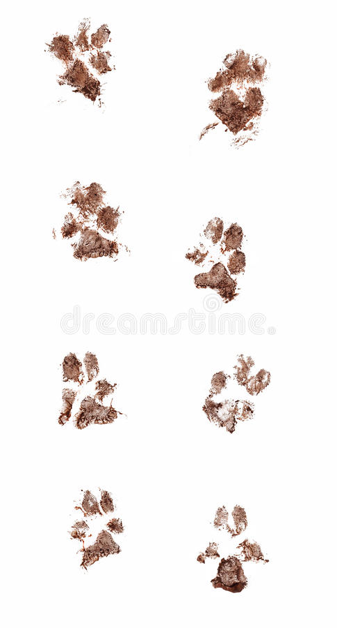泥泞的狗爪子印刷品 免版税库存照片