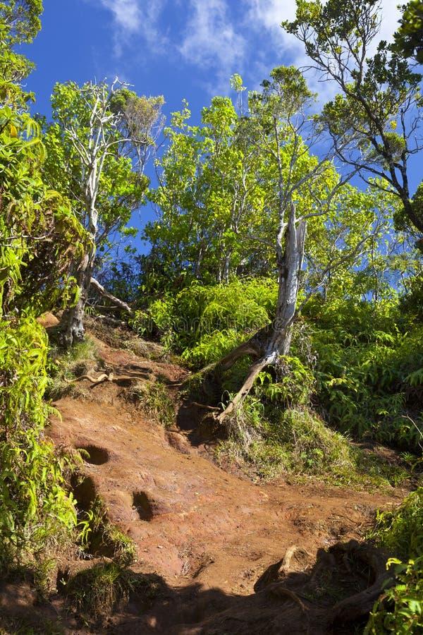 泥泞的足迹通过雨林,考艾岛 库存照片