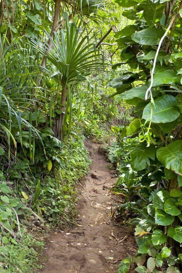 泥泞的足迹通过雨林,考艾岛 免版税库存图片