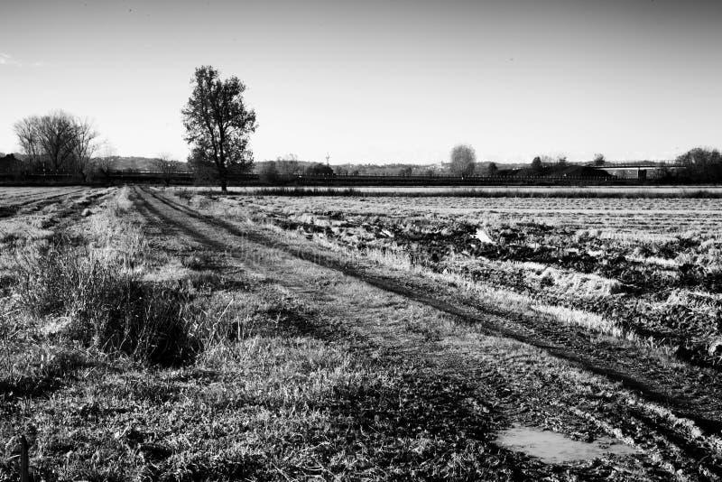 泥泞的领域风景 免版税库存图片