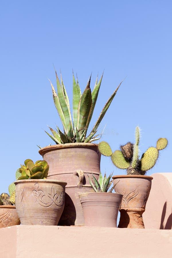 泥罐的多汁植物 免版税库存照片