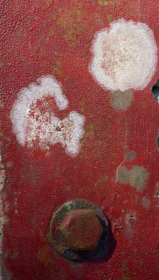 水泥表面上的地衣 免版税库存图片