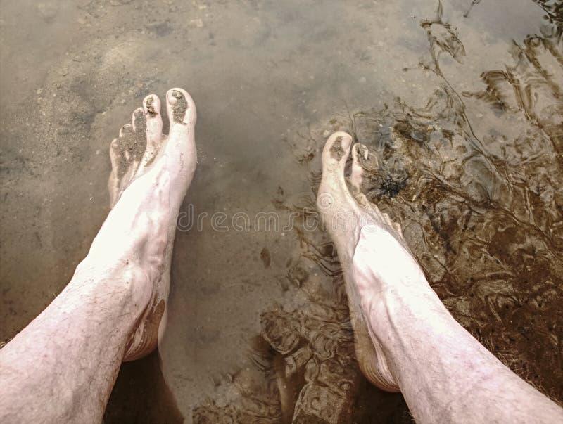 泥运行在障碍极限运动的鞭尾蜥 库存照片