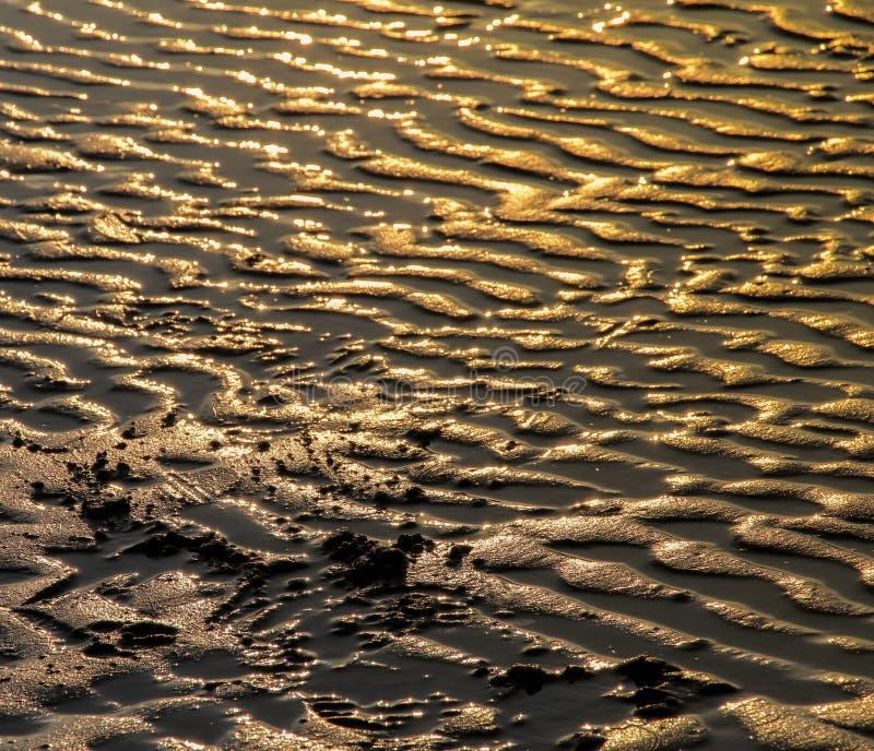 泥滩 图库摄影