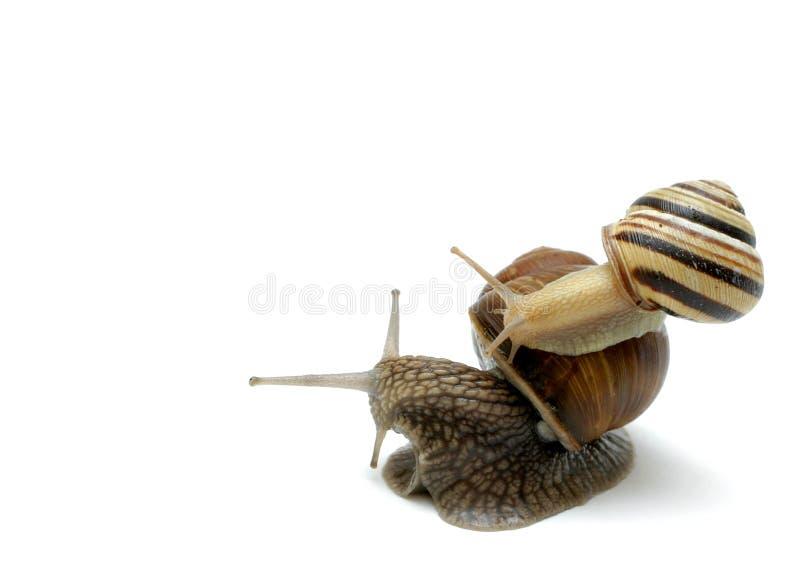 注意肩扛蜗牛 库存图片