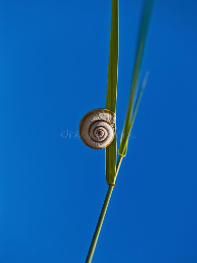 注视自然蜗牛 库存图片
