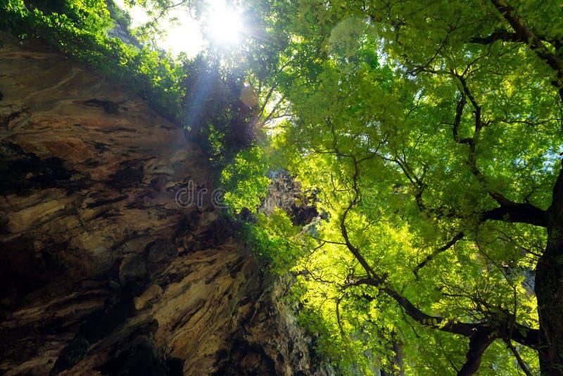 泰国一棵大树的叶子与一块石灰石岩相遇 — 热带森林 免版税库存照片
