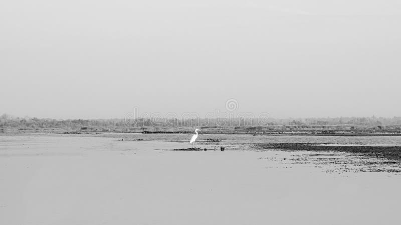 泰国乌东他尼荷湖农汉白鹭 免版税库存照片