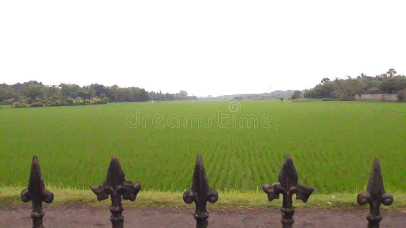 泰国农场 免版税图库摄影