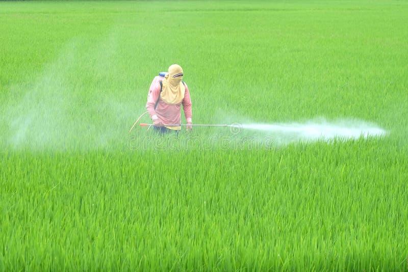 泰国农夫喷洒在领域的杀虫药 图库摄影