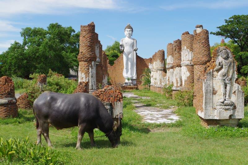 泰国国家边 免版税库存图片