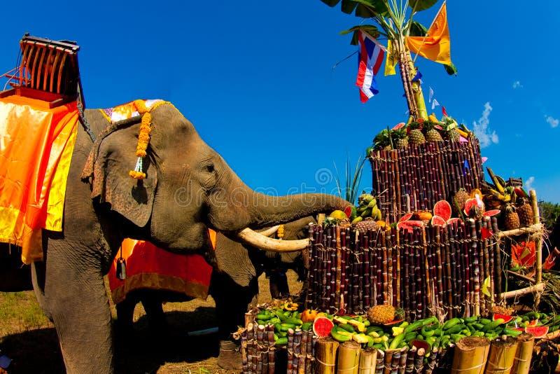 泰国大象的幸福 免版税库存照片