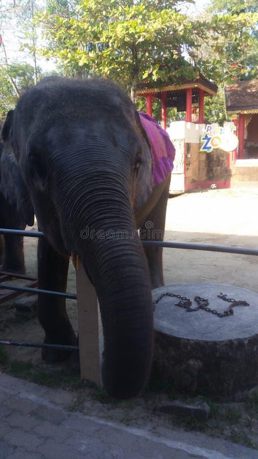 泰国大象 免版税图库摄影