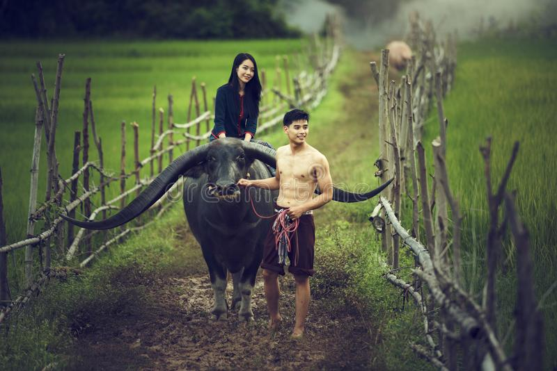 泰国夫妇农夫和水牛在米调遣 库存图片