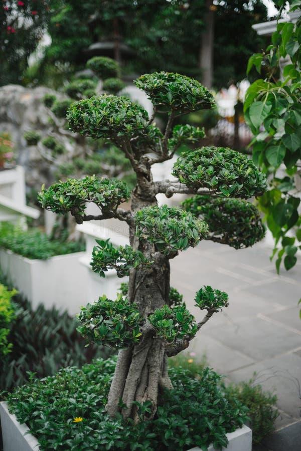 泰国寺庙的绿色植物 免版税库存图片