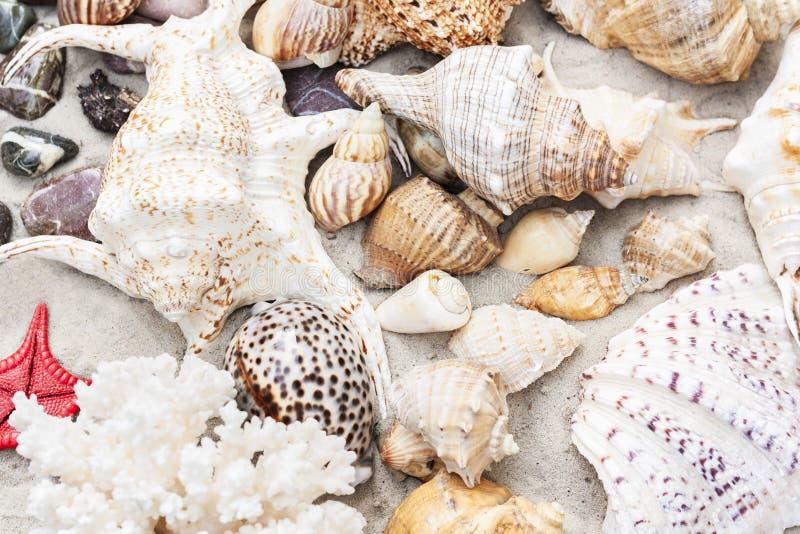 泰国海滩夏天背景–贝壳和海星在沙子,拷贝空间文本的 库存图片