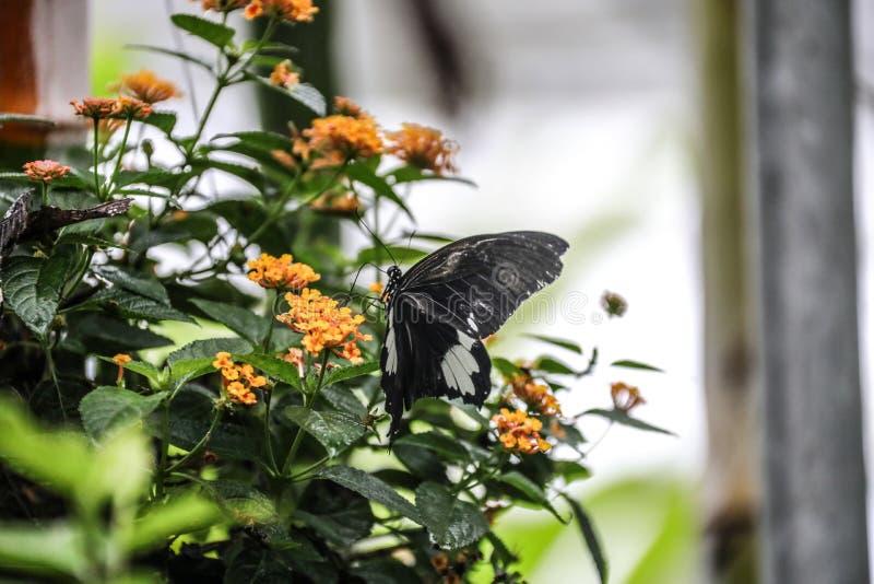 泰国清迈兰花蝴蝶庭院 库存照片