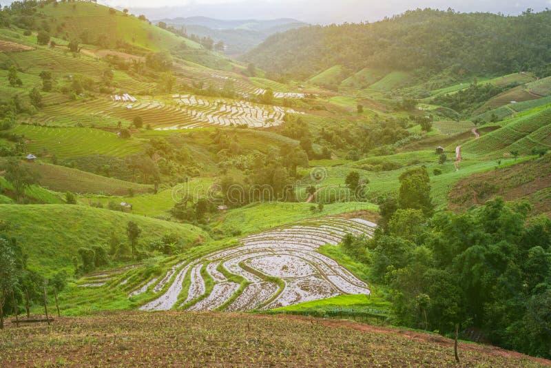 泰国清迈梅 — 贾姆村梯田 库存照片