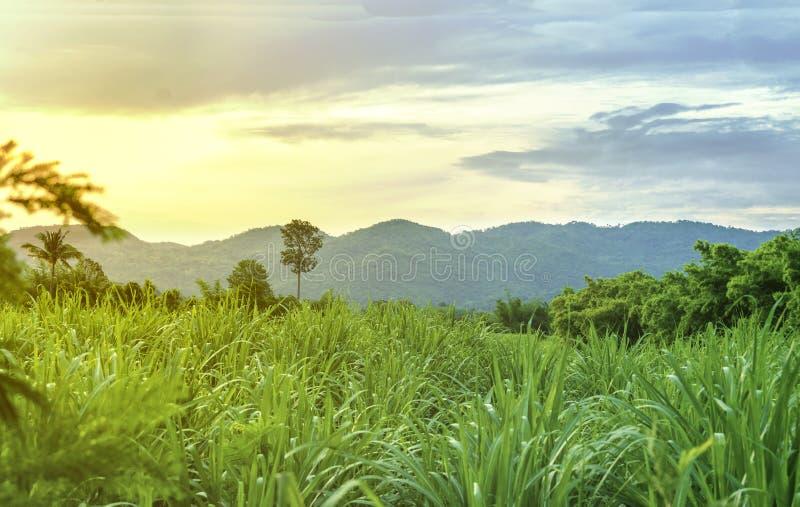 泰国的地方本质的绿叶的风景有山和草原的看法在早晨 库存照片