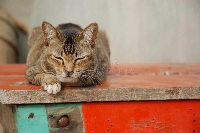 泰国的猫 免版税库存图片