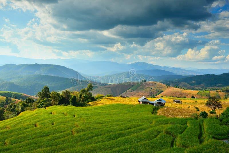 泰国山�^_图片 包括有 大阳台, 模式, 泰国, 横向, 小山, 绿色, 耕种, 旅行