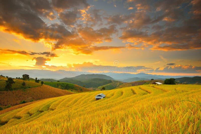 泰国的玉米田日落 免版税库存图片